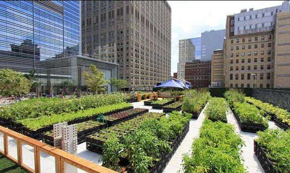 urban agriculture benefits