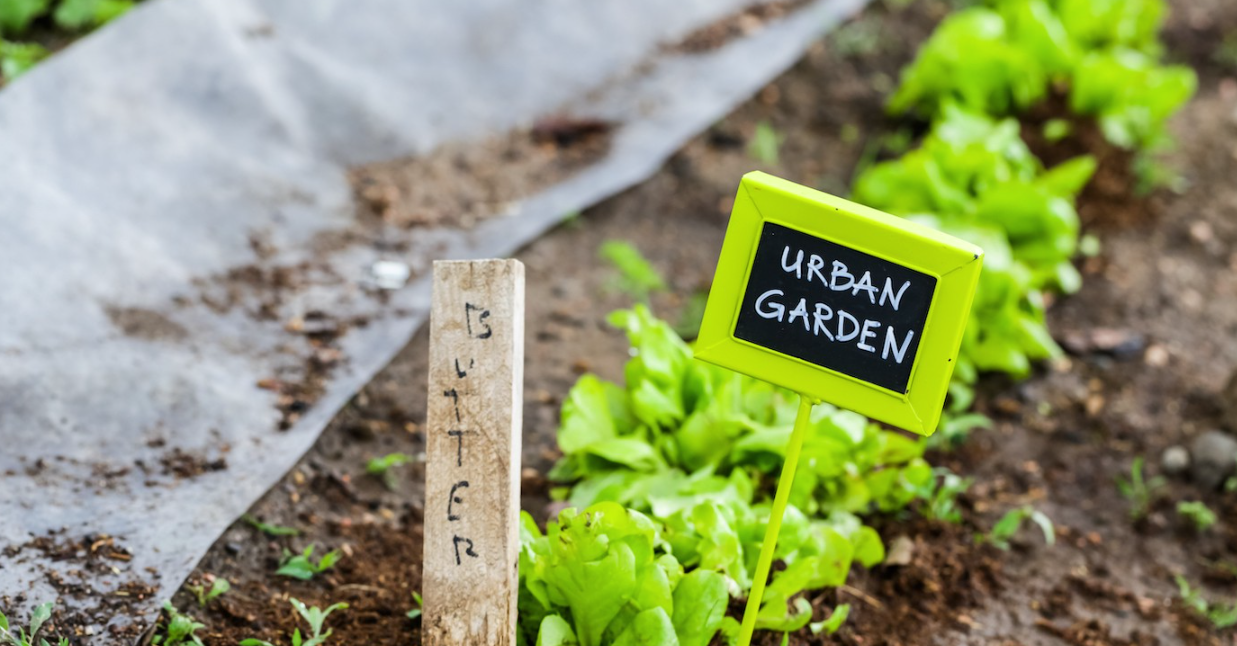 urban farming business